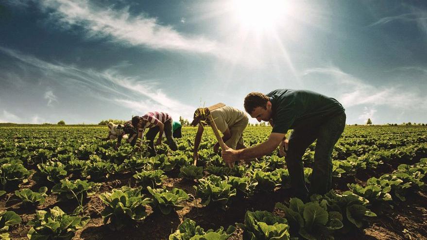 Samsun BüyükŞehir Belediyesinden Çiftçiye Destek