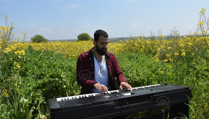 Kanola Tarlasında Piyano Keyfi