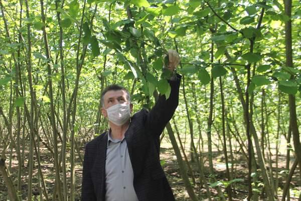 Ziraat Odası Başkanı Aydemir'den Fındık Üreticilerine Uyarı