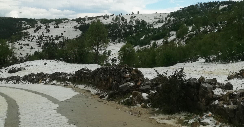 vezirköprü`de meydana gelen dolu tarım arazilerine zarar verdi
