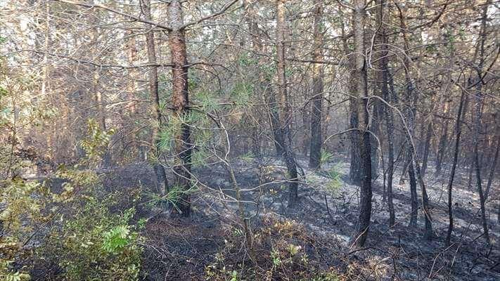 Samsun Bafra'da Orman Yangını