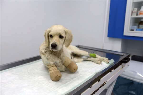 Bacakları Kesilmiş Halde Bulunan Köpekle İlgili 2 Kişiye Para Cezası Verildi