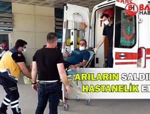 ARILARIN SALDIRISI HASTANELİK ETTİ