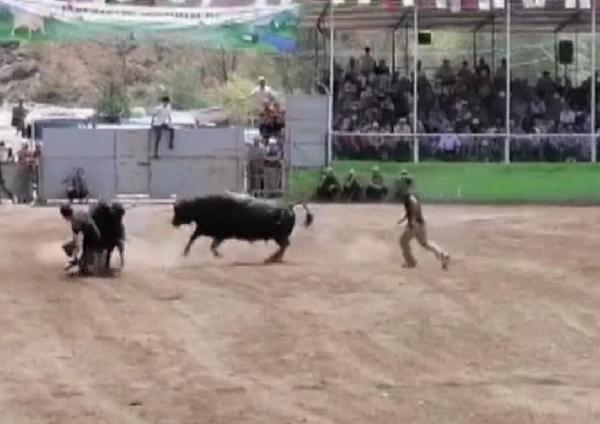 boğa güreşi festivalinde korkutan anlar; kaçan boğanın altında kaldı 8