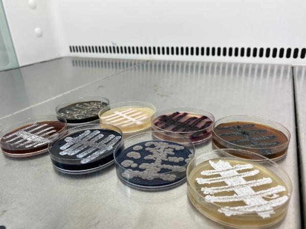 türk bilim adamları, 6 ülkede 60 yeni tür bakteri keşfetti