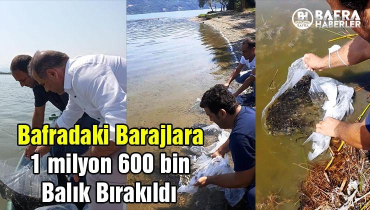 bafradaki barajlara 1 milyon 600 bin balık bırakıldı