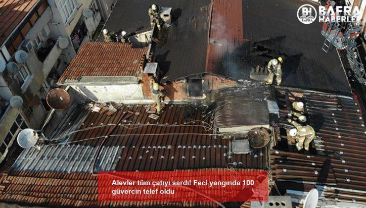 Alevler tüm çatıyı sardı! Feci yangında 100 güvercin telef oldu