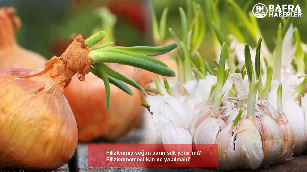 filizlenmiş soğan sarımsak yenir mi? filizlenmemesi için ne yapılmalı? 4