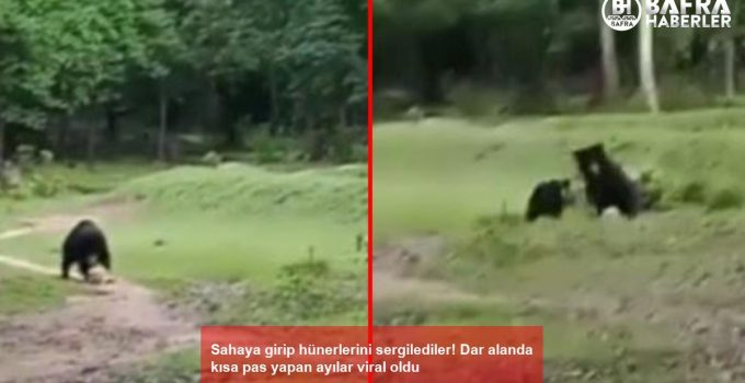 Sahaya girip hünerlerini sergilediler! Dar alanda kısa pas yapan ayılar viral oldu